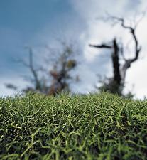El huracán, el árbol gigante y la hierba