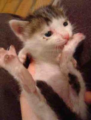 Me levanté, bebí semen y me convertí en un felino heterosexual.