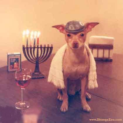 """Hoy dos palabras: """"Perro judío"""". ¿Por qué molesta (si molesta) la imagen del perro judío?"""